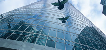 Bird Friendly Glass by Guardian Glass North America - Limit bird collisions with advanced UV coated glass