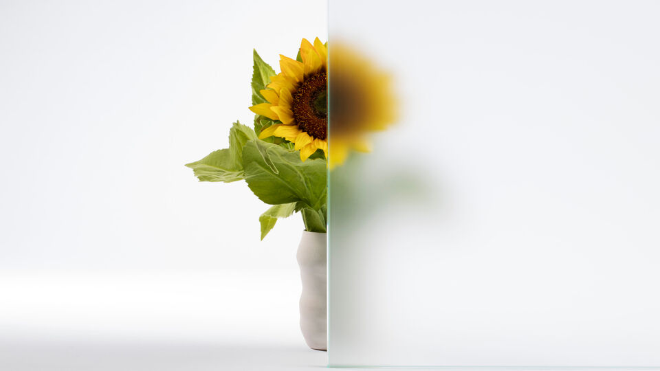 sunflower half covered by glass to demonstrate characteristics of acid-etched glass