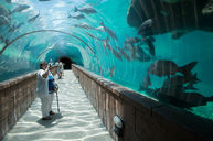Predator Lagoon and Tunnel