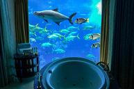 Underwater Suite