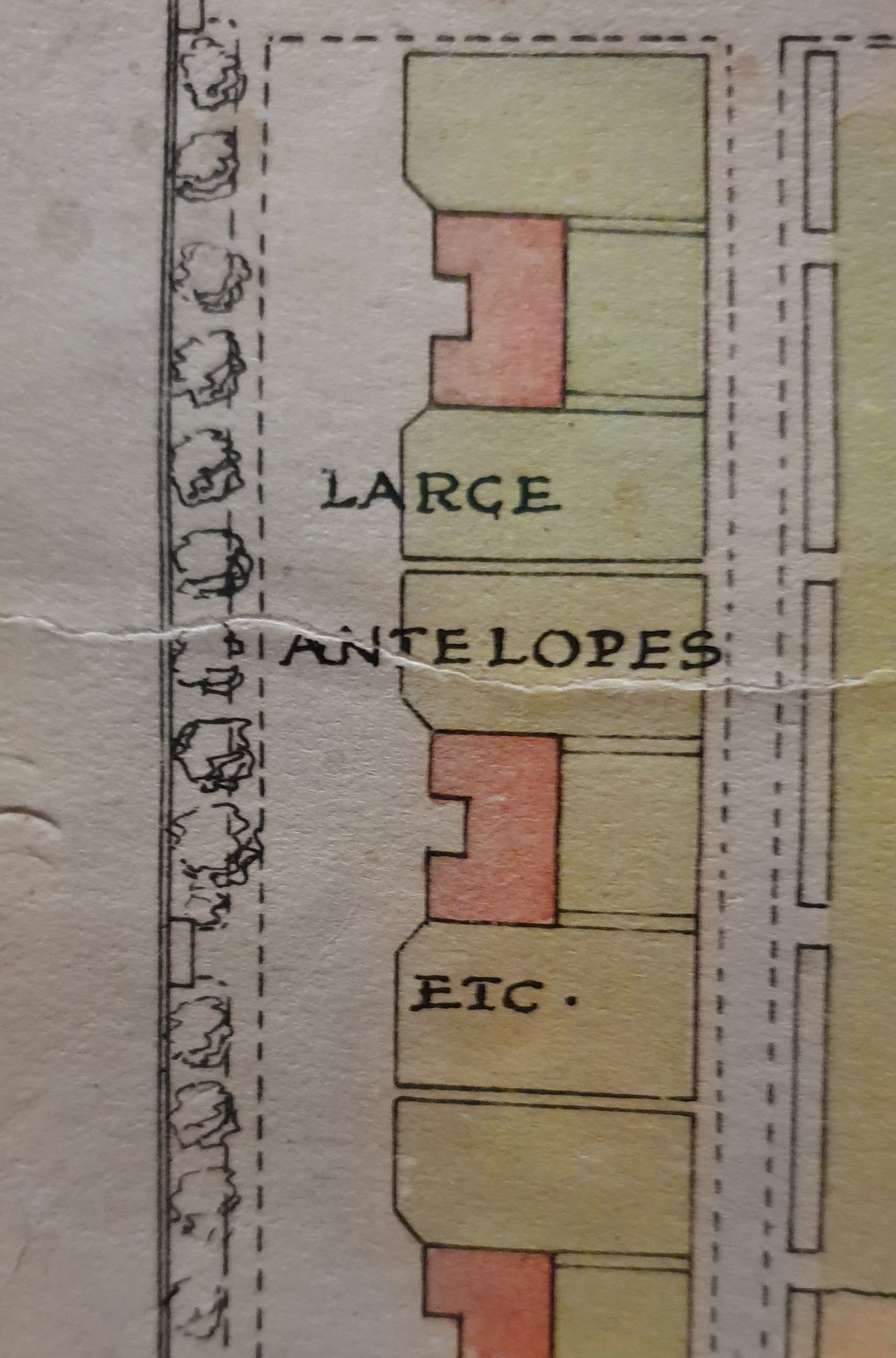 "Close-up of the plan for the Scottish Zoological Garden. Sections of the plan are coloured yellow, green, red. In squares and other shapes across the plan, denoting which animals are where, animal names are written.  This is a close up of some enclosures across which is simply written ""large antelopes etc."""