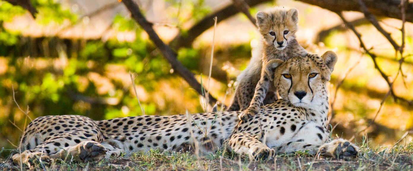 Kenya and Tanzania: Luxury Safari and Beach