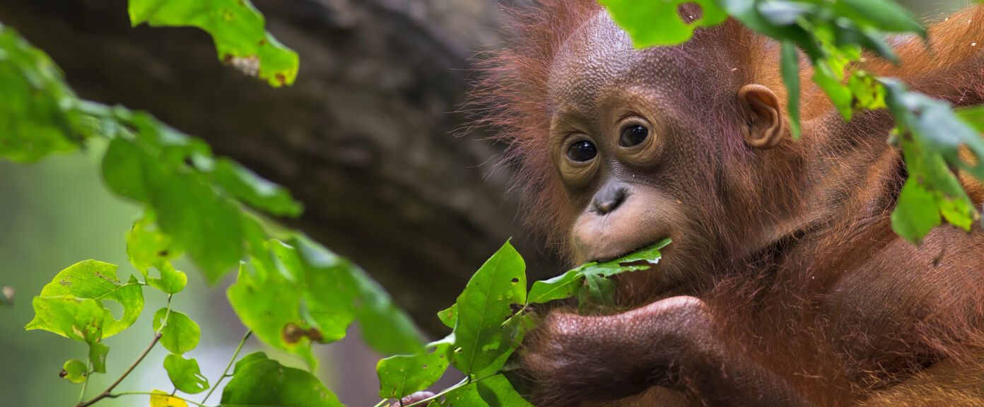 Natural Wonders and Wildlife in Borneo