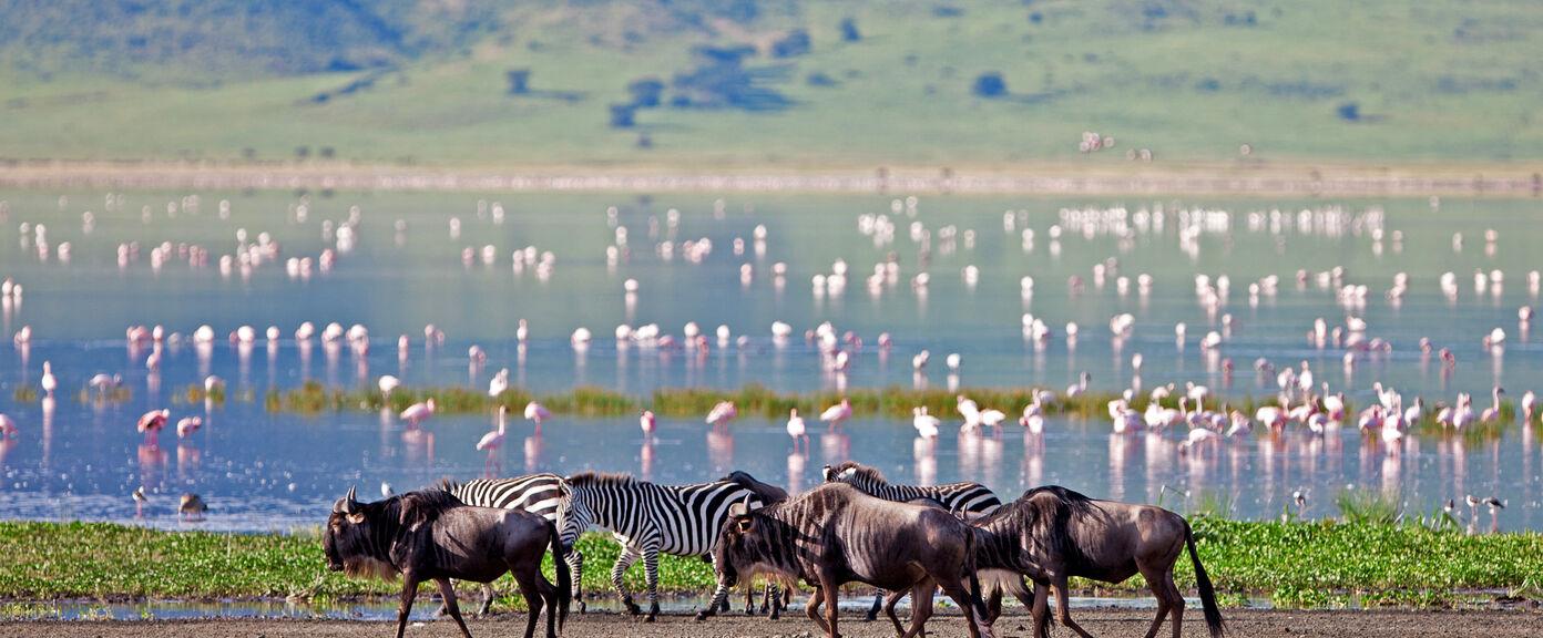Highlights of Northern Tanzania
