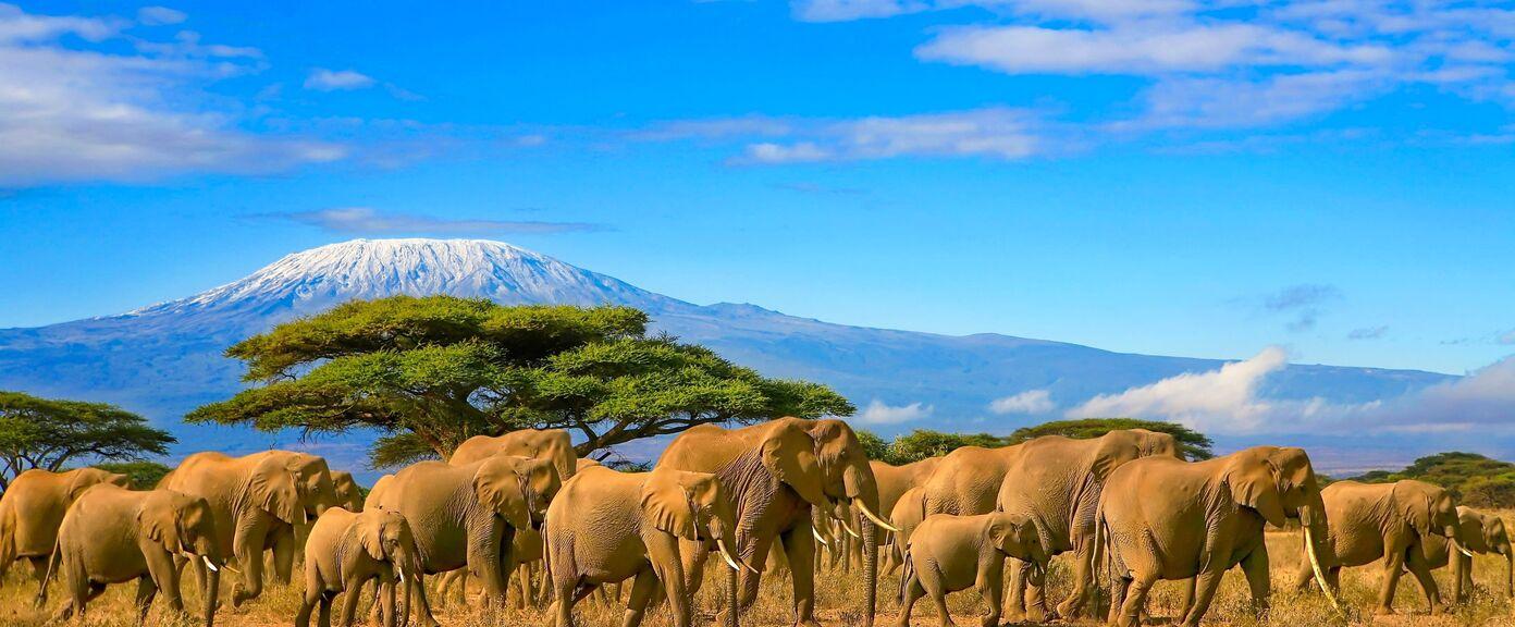 Classic Northern Tanzania