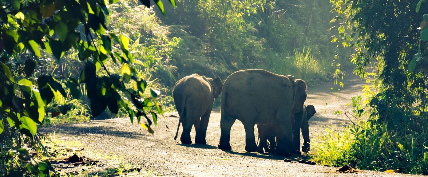 The Biodiversity of Borneo