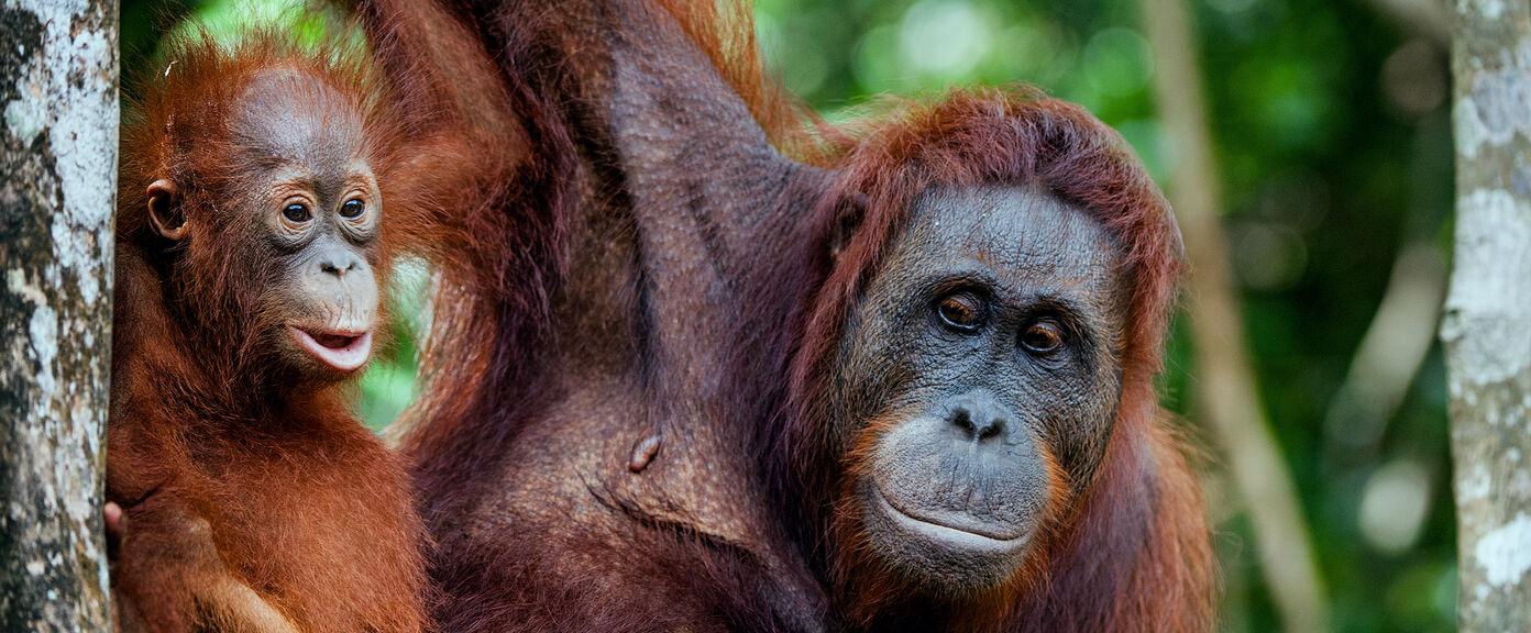 Borneo Race for the Rainforest Challenge