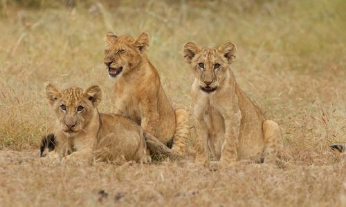 Selous Game Reserve and Ruaha National Park