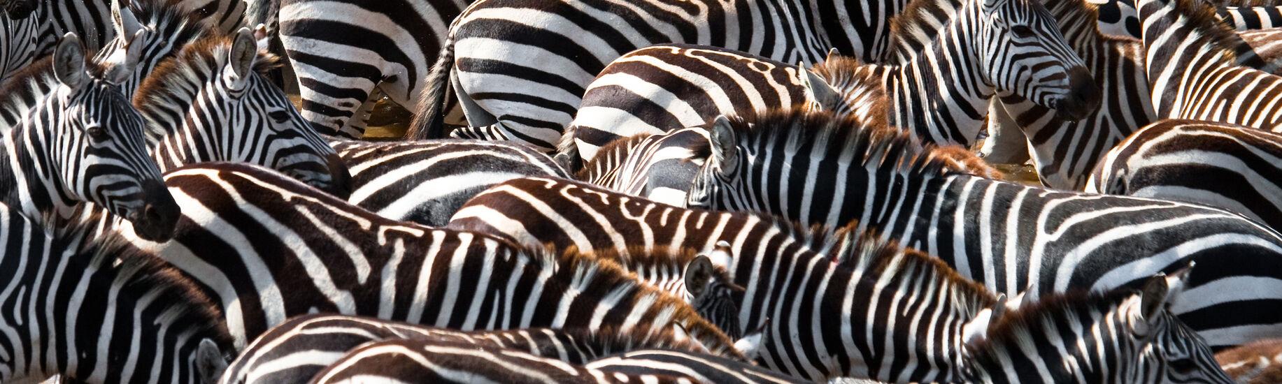 Tarangire and Lake Manyara National Parks