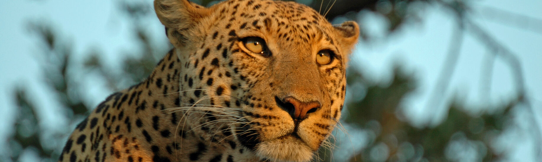 Linyanti Wildlife Reserve