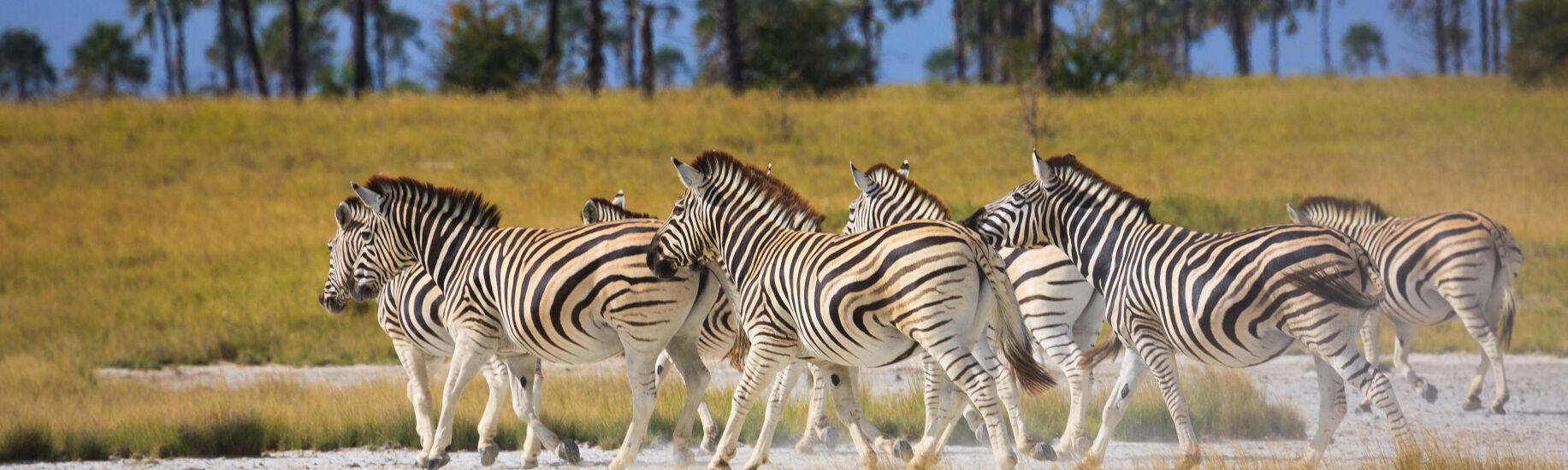 Botswana Special Safari