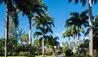 Coral Reef Club : Palms Along Driveway