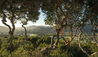Carmel Valley Ranch : View Across Valley