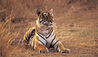 The Oberoi Vanyavilas : Tiger - Wildlife Experience At The Oberoi Vanyavilas