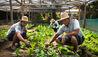 Amanpulo : Organic Garden