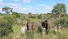Abu Camp : Elephant Encounters