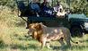 Jao Camp : Lion Sighting On Safari