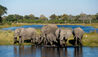 Kings Pool Camp : Herd Of Elephants Drinking