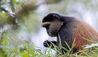 Bisate Lodge : Rwanda Mountain Gorillas