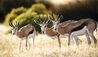 Bushmans Kloof Wilderness Reserve & Wellness Retreat : Wildlife Surrounding Bushmans Kloof