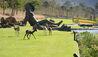 Leeu Estates : Gardens, Statue And Free-roaming Deer