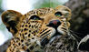 Leopard Hills Private Game Reserve : Wildlife