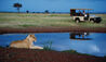 Lion Sighted By A Waterhole On Safari