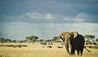 Singita Serengeti House : Wildlife Surrounding Singita Serengeti House