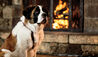 The Ritz-Carlton, Bachelor Gulch : The Resort's St. Bernard 'Bachelor'