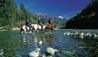 Clayoquot Wilderness Resort : Horses