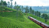 Ceylon Tea Trails : Train Through The Tea Plantations