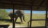 Selinda Camp : Wildlife Viewing