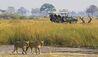 Selinda Camp : Safari Activities