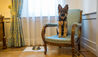 Due Torri Hotel : Pet Friendly