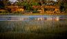 Vumbura Plains : North Camp