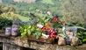 Borgo Pignano : Fresh Produce