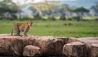 Dunia Camp : Leopard