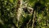One&Only Nyungwe House : Chimpanzee