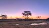 Ol Pejeta Bush Camp : Sunset
