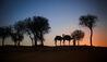 The Ritz-Carlton Ras Al Khaimah, Al Wadi Desert : Camel