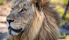 Cheetah Plains Private Game Reserve : Safari