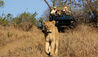 MalaMala Rattray's Camp : Game Drives