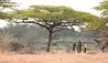 Roho ya Selous : Guided Walks