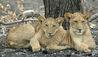 Roho ya Selous : Wildlife
