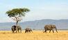 Sayari Camp : Elephants