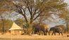Sayari Camp : Elephants Passing Camp