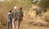 Sayari Camp : Walking Safari