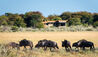 Kalahari Plains Camp : Wildlife