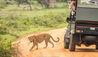 Leopard Trails Wilpattu : Game drive