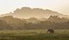 Leopard Trails Yala : Surroundings